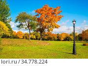 City autumn landscape of trees with beautiful yellow leaves. City... Стоковое фото, фотограф Zoonar.com/Arcadi Bulva / easy Fotostock / Фотобанк Лори