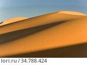 Hongotlyn Dunes, Gobi Desert, Mongolia. October 2008. Стоковое фото, фотограф Jeff Foott / Nature Picture Library / Фотобанк Лори