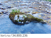 Small world is located on a boulder sticking out in the middle of a mountain river. Стоковое фото, фотограф Евгений Харитонов / Фотобанк Лори