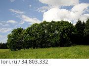 Wiese, wald, waldrand, wiese, frühling, frühjahr, botanik, natur,... Стоковое фото, фотограф Zoonar.com/Volker Rauch / easy Fotostock / Фотобанк Лори