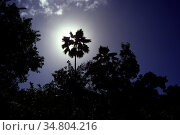 Sonne hinter Palme/Karibik (analog) - Sun behind palm tree/Caribbean... Стоковое фото, фотограф Zoonar.com/Bernd Hoyen / easy Fotostock / Фотобанк Лори