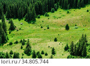 Mountain forest and meadow summer landscape, view from above. Стоковое фото, фотограф Zoonar.com/Serghei Starus / easy Fotostock / Фотобанк Лори