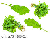 Set from green caucasian cress (tsitsmati) herbs isolated on white... Стоковое фото, фотограф Zoonar.com/Valery Voennyy / easy Fotostock / Фотобанк Лори