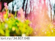 Beautiful garden spring flowers. Стоковое фото, фотограф Zoonar.com/Galyna Andrushko / easy Fotostock / Фотобанк Лори