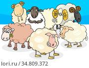 Cartoon Illustration of Sheep and Rams Farm Animal Characters. Стоковое фото, фотограф Zoonar.com/Igor Zakowski / easy Fotostock / Фотобанк Лори