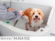 An image of bathing a cute dog. Стоковое фото, фотограф Zoonar.com/magann / easy Fotostock / Фотобанк Лори