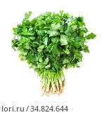 Big bunch of fresh green cilantro herb isolated on white background. Стоковое фото, фотограф Zoonar.com/Valery Voennyy / easy Fotostock / Фотобанк Лори