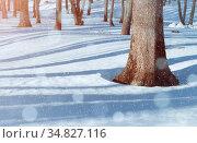 Зимний лес в солнечный день. Зимний пейзаж. Winter forest landscape, forest trees and snowdrifts on the foreground. Winter snowy forest scene. Стоковое фото, фотограф Зезелина Марина / Фотобанк Лори