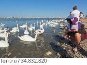 Туристы любуются грациозными лебедями на озере Сасык-Сиваш в городе Евпатория, Крым. Редакционное фото, фотограф Николай Мухорин / Фотобанк Лори