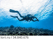 Diver hovering over the bottom of the Indian ocean. Стоковое фото, фотограф Сергей Фролов / Фотобанк Лори