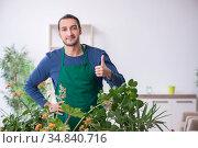 Young male gardener with plants indoors. Стоковое фото, фотограф Elnur / Фотобанк Лори
