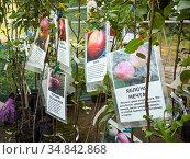 Молодые саженцы плодовых деревьев с описаниями сорта. Стоковое фото, фотограф Вячеслав Палес / Фотобанк Лори