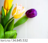 spring fresh bouquet of colorful beautiful yellow tulips - holiday. Стоковое фото, фотограф Анна Гучек / Фотобанк Лори