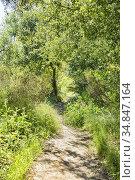 Los Penasquitos Canyon Preserve, San DIego, California. Стоковое фото, фотограф Julia Hiebaum / age Fotostock / Фотобанк Лори