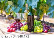 Wine on wooden table with fresh grapes in vineyard. Стоковое фото, фотограф Яков Филимонов / Фотобанк Лори