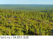 Endless coniferous forests to horizon. Northern Finland, Lapland. Стоковое фото, фотограф Валерия Попова / Фотобанк Лори