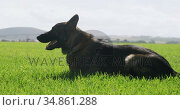 Shepherd dog with his owner in the farm 4k. Стоковое видео, агентство Wavebreak Media / Фотобанк Лори