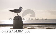 Seagull bird perching on a railing 4k. Стоковое видео, агентство Wavebreak Media / Фотобанк Лори