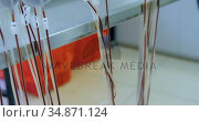 Laboratory technician analyzing blood bag 4k. Стоковое видео, агентство Wavebreak Media / Фотобанк Лори