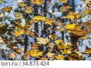 Желтые опавшие листья клена на поверхности пруда. Осень в Подмосковье. Стоковое фото, фотограф Владимир Сергеев / Фотобанк Лори
