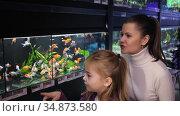 Happy family with cute preteen daughter choosing tropical fish for home aquarium in pet shop. Стоковое видео, видеограф Яков Филимонов / Фотобанк Лори