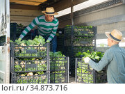 Hispanic farm worker loading truck with harvested leaf vegetables. Стоковое фото, фотограф Яков Филимонов / Фотобанк Лори