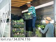 Workers load mangold boxes in a truck. Стоковое фото, фотограф Яков Филимонов / Фотобанк Лори