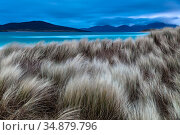 Blue hour before sunrise at the dunes of Seilebost beach, Lewis and Harris, Scotland. February 2018. Стоковое фото, фотограф Theo  Bosboom / Nature Picture Library / Фотобанк Лори
