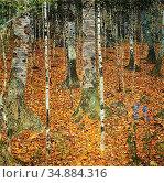 Klimt Gustave - Birch Forest 2 - Austrian School - 19th Century. Редакционное фото, фотограф Artepics / age Fotostock / Фотобанк Лори