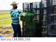 Man in mask stacking crates on farm. Стоковое фото, фотограф Яков Филимонов / Фотобанк Лори
