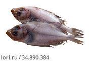 Fresh megrim sole flatfish. Стоковое фото, фотограф Яков Филимонов / Фотобанк Лори