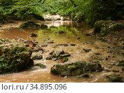 Muddy river in the subtropical forest after rain. Стоковое фото, фотограф Евгений Харитонов / Фотобанк Лори