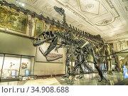 Dinosaurier Skelett im Sauriersaal des Naturhistorischen Museum Wien... Стоковое фото, фотограф Peter Schickert / age Fotostock / Фотобанк Лори