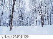 Зимний лес. Зимний пейзаж. Winter landscape with falling snow - wonderland forest with snowfall over winter grove. Snowy winter scene. Стоковое фото, фотограф Зезелина Марина / Фотобанк Лори