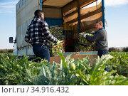 Farmers load artichoke boxes in a truck. Стоковое фото, фотограф Яков Филимонов / Фотобанк Лори