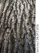 Berlin, Germany, bark of a maple tree. Редакционное фото, агентство Caro Photoagency / Фотобанк Лори