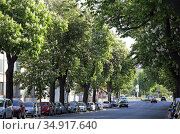 Berlin, Germany, traffic on the Attilastrasse flanked by blossoming chestnut trees. Редакционное фото, агентство Caro Photoagency / Фотобанк Лори