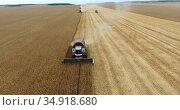 Grain harvester driving on golden wheat fields, front view, harvesting yellow wheat at summer or autumn. Стоковое видео, видеограф Кекяляйнен Андрей / Фотобанк Лори