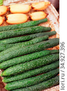 The cucumber (<i>Cucumis sativus</i>), or less formally cuke, is ... (2018 год). Редакционное фото, фотограф David Henley / Pictures From History / age Fotostock / Фотобанк Лори