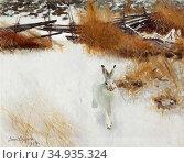 Liljefors Bruno - Hare I Vinterlandskap 03 - Swedish School - 19th... Редакционное фото, фотограф Artepics / age Fotostock / Фотобанк Лори