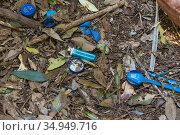 Blue plastic items including spoon, bottle tops and cigarette lighter gathered by male Satin bowerbird (Ptilonorhynchus violaceus) at bower. Lamington National Park, Queensland, Australia. 2015. Стоковое фото, фотограф Suzi Eszterhas / Nature Picture Library / Фотобанк Лори