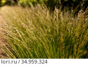 sunny summer field with grass or herbs. Стоковое фото, фотограф Syda Productions / Фотобанк Лори