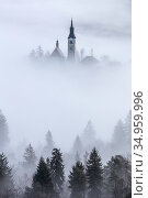 Church of the Assumption of St. Mary in mist, viewed through conifers on shore of Lake Bled, Slovenia. February 2017. Стоковое фото, фотограф Guy Edwardes / Nature Picture Library / Фотобанк Лори