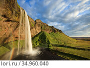 Seljalandsfoss waterfall. Southern Iceland. July 2009. Стоковое фото, фотограф Guy Edwardes / Nature Picture Library / Фотобанк Лори
