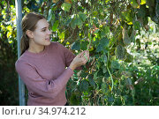 Woman controlling quality of legume plants. Стоковое фото, фотограф Яков Филимонов / Фотобанк Лори