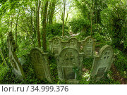 Arnos Vale Cemetery, now disused, overgrown and a refuge for nature... Редакционное фото, фотограф John Waters / Nature Picture Library / Фотобанк Лори