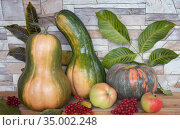 Autumn still life: pumpkins, apples, viburnum berries. Стоковое фото, фотограф Galina Tolochko / Фотобанк Лори