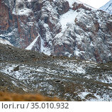 Herd of mountain sheep is masked against the background of rocks, stones and snow (2015 год). Стоковое фото, фотограф Олег Елагин / Фотобанк Лори