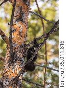 Squirrel sitting on a tree, winter. Стоковое фото, фотограф Михаил Панфилов / Фотобанк Лори