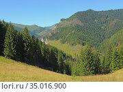 Trees and mountains above Chocholowska Valley. Стоковое фото, фотограф Ignacy Wojciech Pilch / age Fotostock / Фотобанк Лори